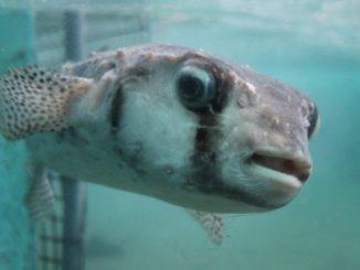 Al acuario, de nuevo