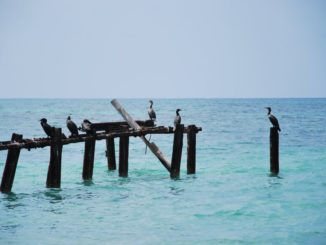 Cuba, Playa Ancon – birds, spring 2010