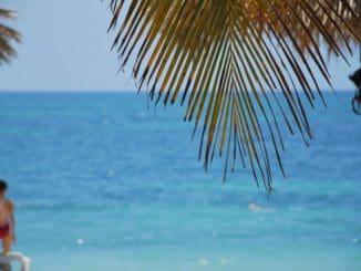 Cuba, Playa Ancon – sea and leaf, spring 2010
