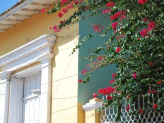 Cuba, Trinidad – flowers, spring 2010
