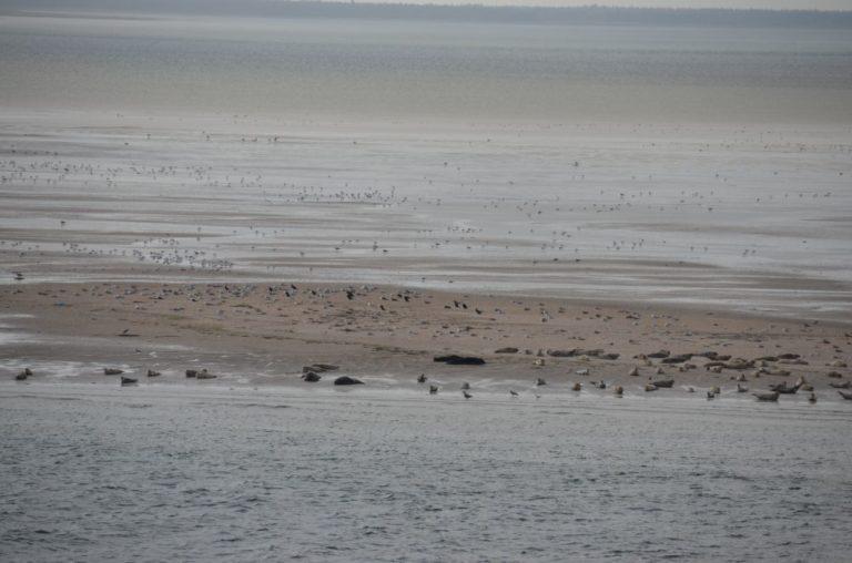 Muchas focas