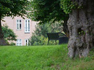 Denmark, Kolding – old tree, Aug.2012