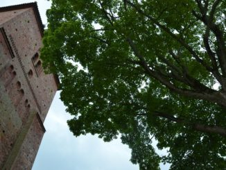 Denmark, Ribe – looking up, July2012