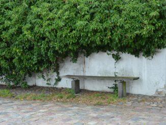 Denmark, Ribe – bench under the green, July2012