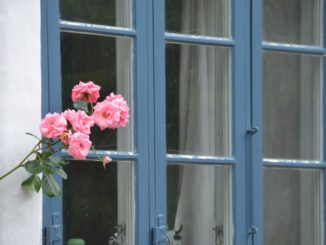 Denmark, Ribe – pink flowers, July2012