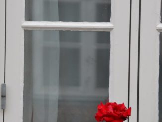 Denmark, Ribe – red rose, July2012