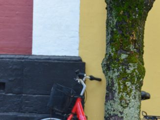 Denmark, Ribe – tree and bicycle, July 2012
