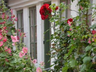 Denmark, Ribe – flowers and windows, July2012