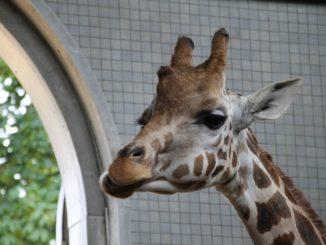 England London Zoo