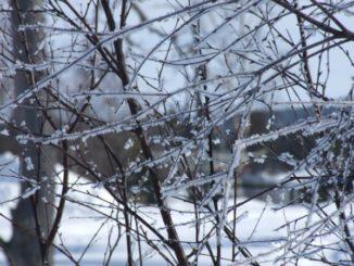 フィンランド、イナリ-氷 2006年