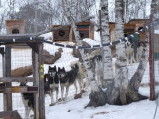 Finland, Ivalo – dog house, 2006
