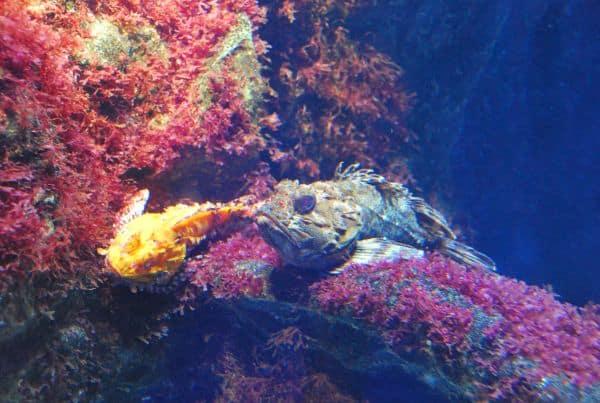 The aquarium, worth visiting
