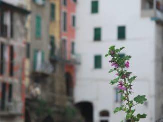 Le case colorate di Riomaggiore