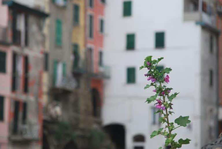リオマッジョーレの色とりどりの家