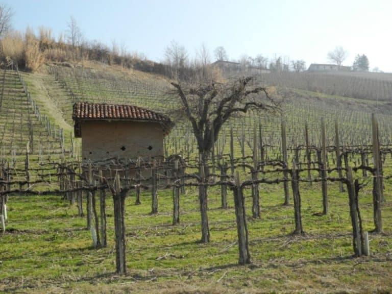 Per comprare il vino nelle Langhe in Piemonte
