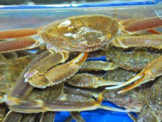 Korea, Busan – crabs, Apr.2012