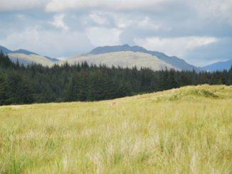 highlands-scozia-verdi-prati