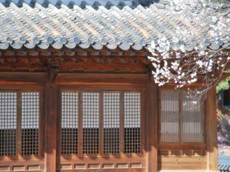 South Korea, Seoul – blossoms and windows, 2011