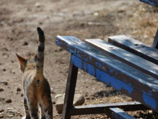 Turkey, Troy – cat and bench, Aug.2012
