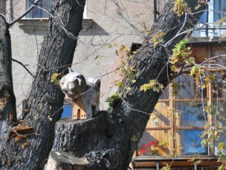 Ukraine, Kiev – cat on the tree, 2011