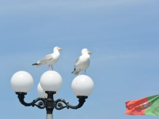 beach – sea gulls and lamp, May 2016