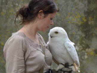 Cerveny Kamen Castle – owl, May2016