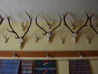 horns, May2016
