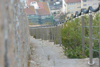 scimmie-rocca-gibilterra-scalinata-capitale