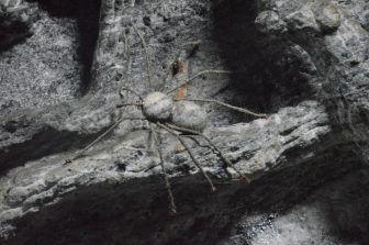 Zipaquira (12)