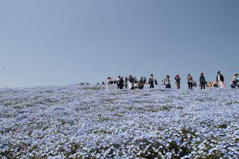 Hitachi Kaihin Park (3)