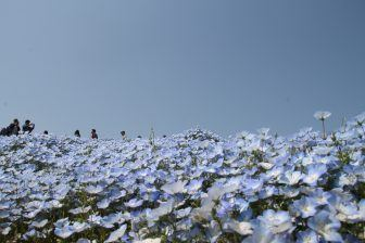 Fantastico mondo blu
