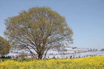 Hitachi Kaihin Park (7)