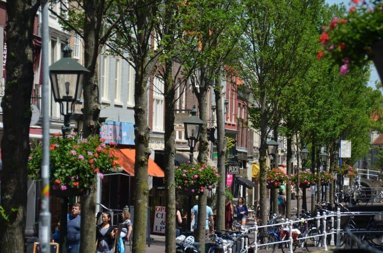 Delft – trees, June 2017 (Delft)