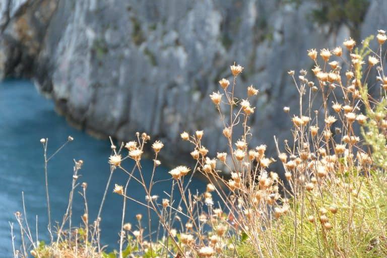 to Zakynthos Island