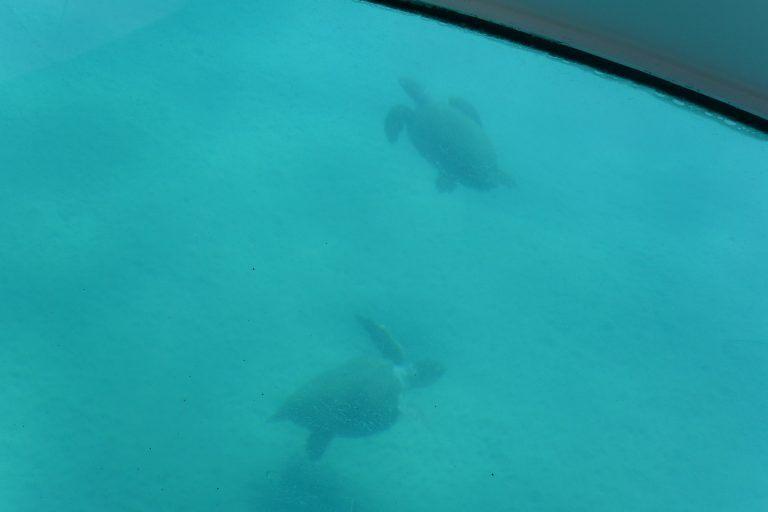 Abbiamo visto le tartarughe marine in mare aperto