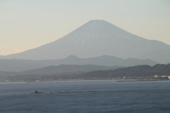 Enoshima – Mt.Fuji and a kite, Jan.2018