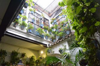 the walking tour in Malaga — Picasso, a flower and the wine cellar