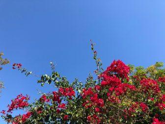 Colonia del Sacramento – amethyst, Mar.2018