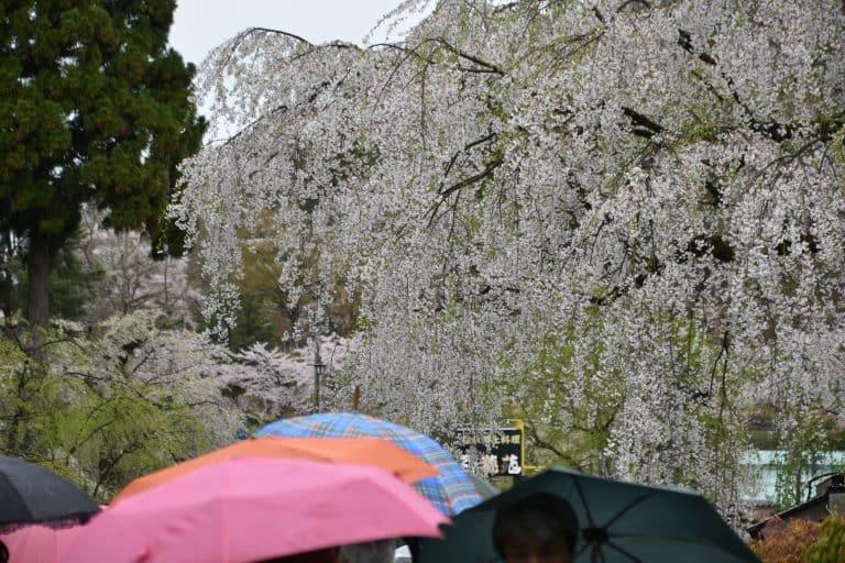 Camminando nella zona residenziale dei Samurai in una piovosa Kakunodate