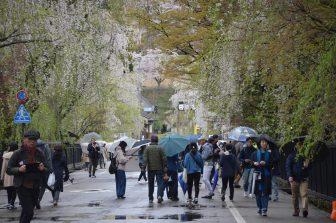 giappone-akita-kakunodate-visitatori-ciliegi-fiore