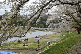 Japan-Akita-Kakunodate-Hinokinai River-cherry trees-people-bank