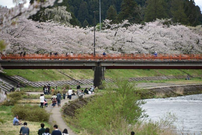 Il Festival della fioritura dei ciliegi di Kakunodate