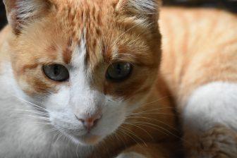 la-orotava-gatto-ristorante