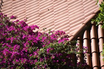 fiori-tenerife-isole-canarie