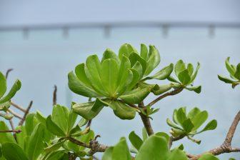 Hacia la Isla Ikema