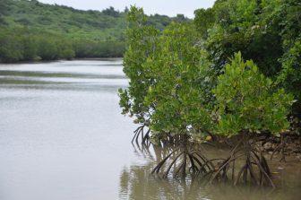 Japan-Miyakojima-Shimajiri-mangrove-view