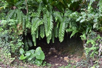 Japan-Miyakojima-Botanical Garden-entrance-trench-WW2
