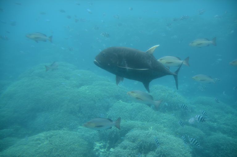 Looking At The Underwater World of Miyako-jima