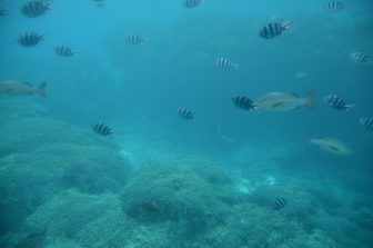 Japan-Miyakojima-underwater-fish