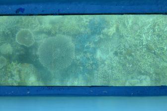 giappone-Miyakojima-Ikema isola-coralli